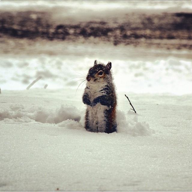mu snow